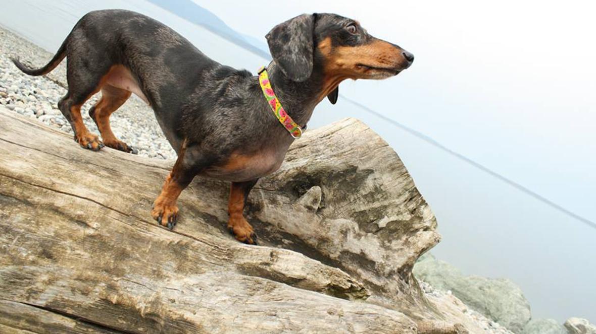 Pet Sitting and Dog Training Bellingham